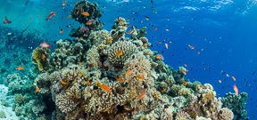 Study Shows Reefs May Survive Climate Change Photo