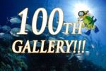 DivePhotoGuide reaches 100 pro galleries Photo