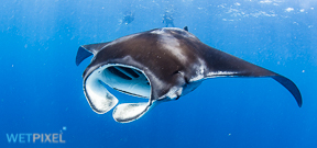 Genus Manta ceases to exist Photo