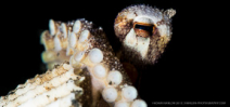 Late Availability: Wetpixel/Mustard Lembeh Macro workshop Photo