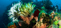 President Obama announces Pacific marine sanctuary Photo