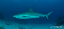Costa Rica pledges not to protect sharks Photo