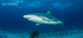 Dominican Republic bans shark fishing Photo