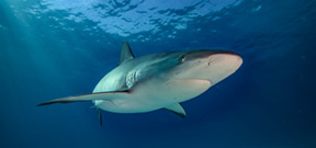 Paper calls for ban on shark fin consumption and trade Photo