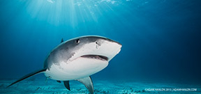 "BBC ""Shark"" series goes to air Photo"
