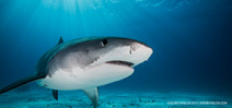 SharkBase seeks citizen shark scientists Photo