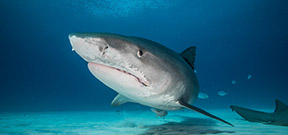 New shark sanctuary announced in Madagascar Photo
