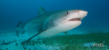 NOAA reopens Florida shark fishery Photo