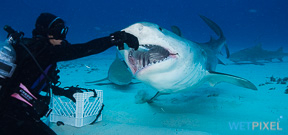 US Congress considers banning shark feeding Photo