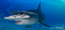 Colombia Announces Ban on Shark Fishing Photo