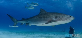 Cornell offers free shark biology course Photo