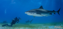 WWF Releases Shark and Ray Ecotourism Guidance. Photo