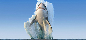 National Geographic outs shark image hoax Photo