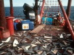 Your action needed: EU shark finning ban Photo