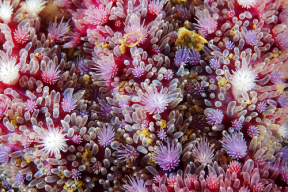 Amazing macro sea star images Photo