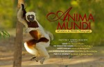 Issue 9 of Anima Mundi now available Photo