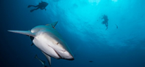 Bull Sharks of Jupiter by Alan Egan Photo