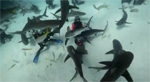 PEW Group on shark conservation in The Bahamas Photo