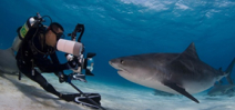 Live coverage of Bahamas Underwater Photo Week Photo