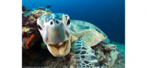 New images from Blue Planet II released Photo