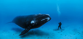 Brian Skerry named as Nikon Ambassador Photo