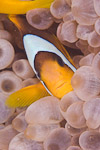 Losing Nemo: IUCN highlights the effects of climate change Photo