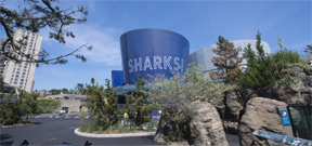 $158 million addition all about Sharks opens in New York Aquarium Photo