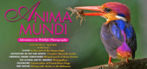 Anima Mundi Issue 22 Available Photo