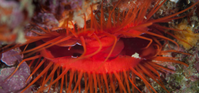 "New paper on ""Disco Clams"" Photo"