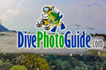DivePhotoGuide awarded Best Website at Antibes Photo