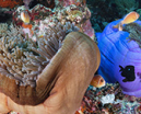 Don Silcock: Diving the Wonderful Witu Islands Photo