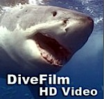 New DiveFilm HD podcast: Fiji in a Beat Photo