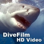 New DiveFilm HD podcast: Antartica Weddell seals Photo