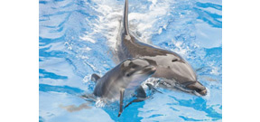 France has banned the captive breeding of dolphins and whales Photo