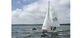 Hundreds of large dolphin pods are reported in the Chesapeake Bay Photo
