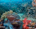 Join Wetpixel in Raja Ampat in 2016 Photo