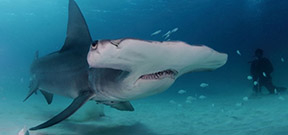 Wetpixel Bahamas Shark Expeditions 2016 Photo