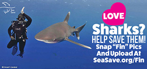 Get Your Fin on for Sharks Photo