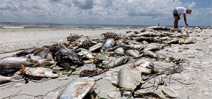 Florida declares state of emergency due to red tide Photo
