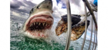 The most viral GoPro photo to date is of a Great White Shark Photo