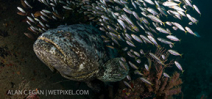 Opinions required: Fishing Goliath Grouper in Florida Photo