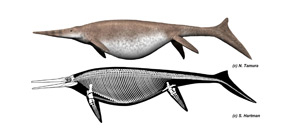 Ichthyosaur bone may belong to largest animal to have ever lived Photo