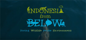 Video: Indonesia from Below Photo