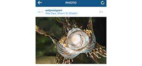 Instagram allows portrait and landscape aspect ratios Photo
