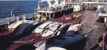 Japanese bid to lift whaling ban fails Photo