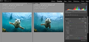 Adobe updates Lightroom family Photo