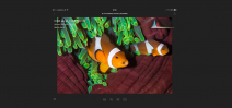 Adobe releases Lightroom Mobile Photo