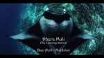 Dhara Muli manta cleaning station on DiveFilm HD Photo