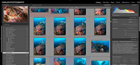 Adobe Acknowledges Performance Issues with Lightroom Photo