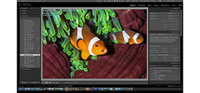 Adobe Lightroom CC/6: Details and Review Photo